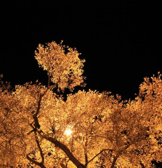 olivier-armengaud-03-buissons-flamboyants