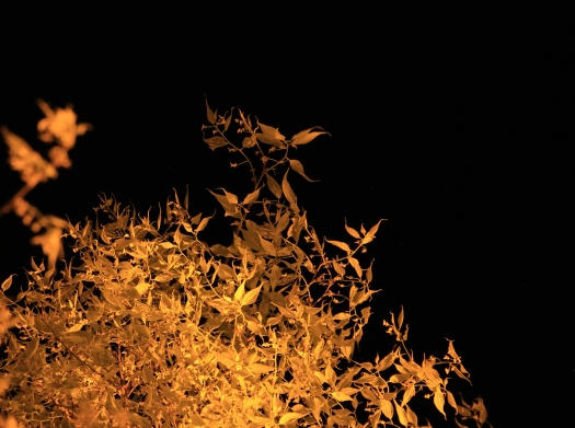 olivier-armengaud-02-buissons-flamboyants
