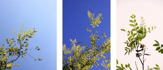 olivier-armengaud-montage-3-buissons-de-jour-fondblanc-cut-50cm