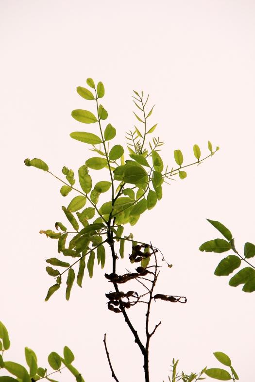 olivier-armengaud-p1-buissons-de-jour