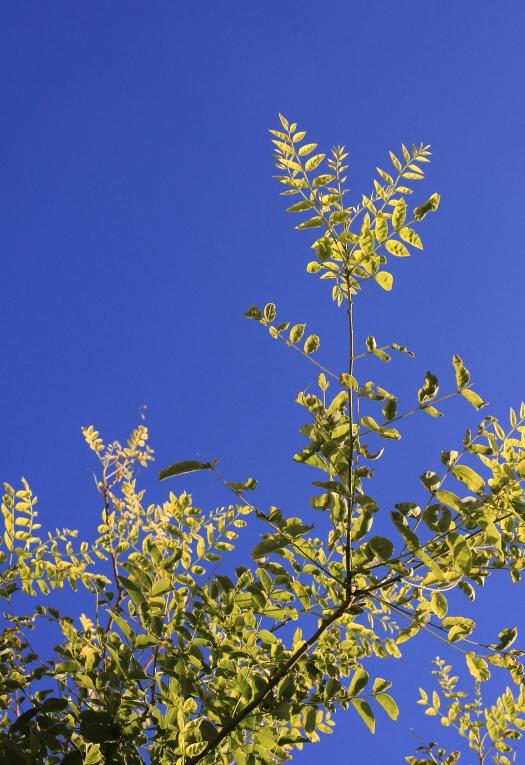 olivier-armengaud-p2-buissons-de-jour