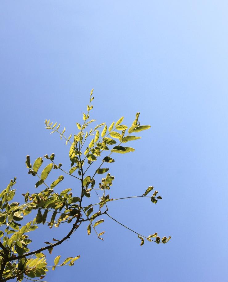 olivier-armengaud-p3-buissons-de-jour