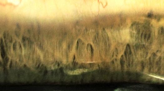 210 - Forêt rocheuse SP--filtrephoto1+corrsel1+satu1+estampLumtam62%+expo1+corrsel2à100% YESYESYES - RVB 72dpi OK IMPRIME